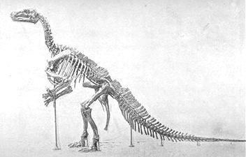 1878 Iguanodon