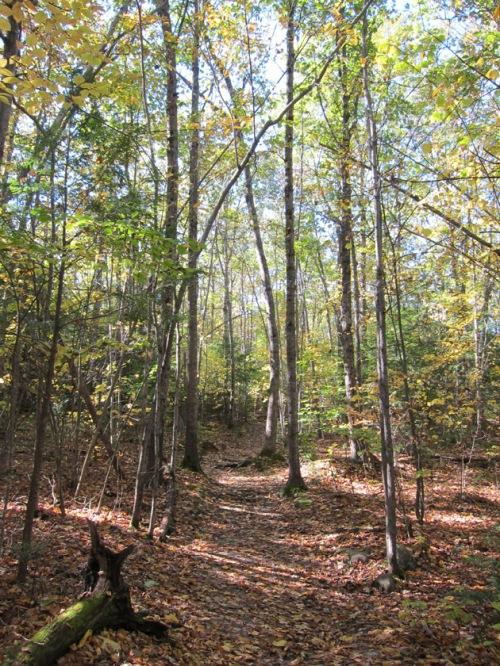 Maine hiking trail
