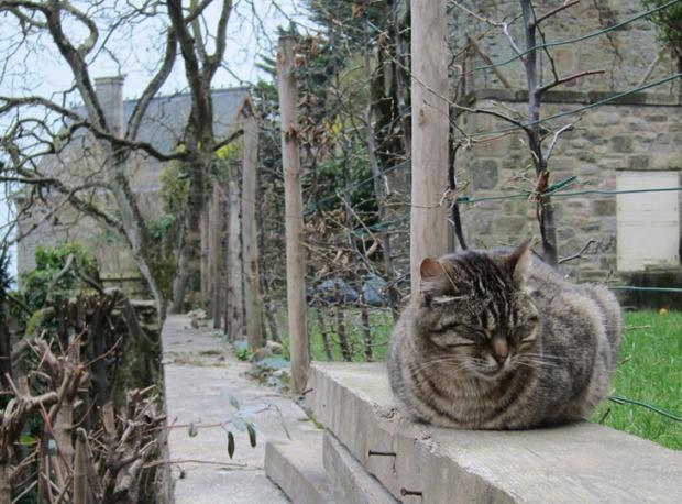 cat, Mont Saint-Michel