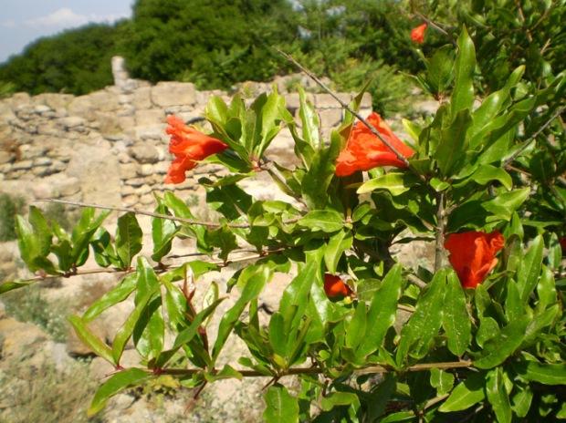 Mozia flower