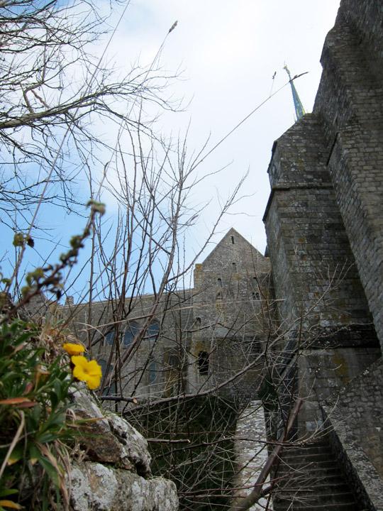 Mont Saint-Michel Flower
