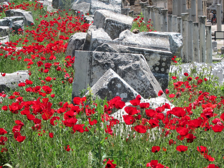 poppies of ephesus