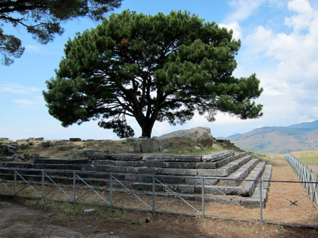 great Altar of Pergamon today, tree