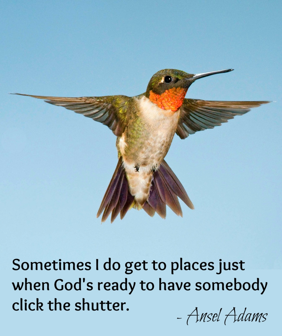 hummingbird quote