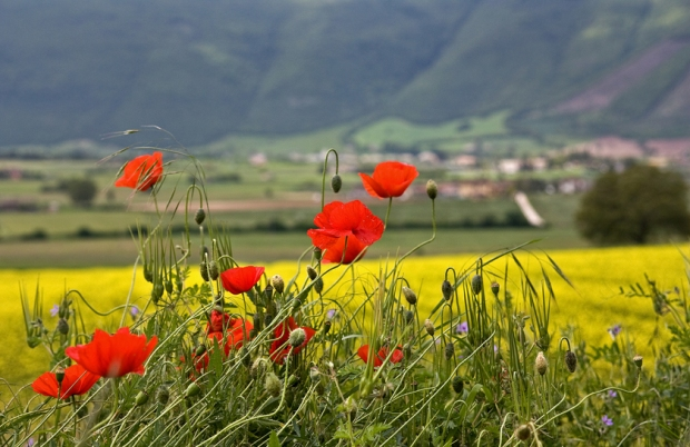 Flowers in Umbria Countryside