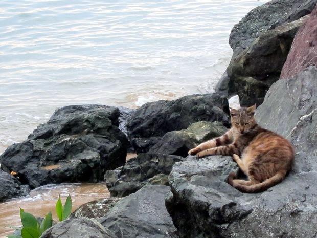 Puerto Rico cat